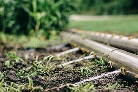 Which Irrigation Type is Best For You?